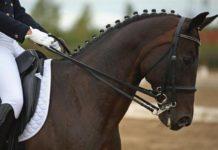 royal-windsor-horse-show.441x330
